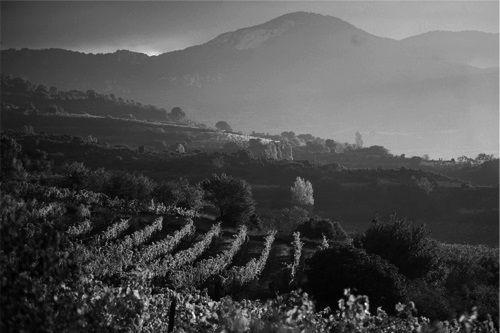 files/images/winemakers/spain/remelluri/remelluri vineyard_bw.jpg