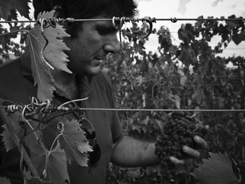 files/images/winemakers/italy/simone-castelli/Simone_Castelli.jpg